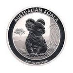 Oncia Koala